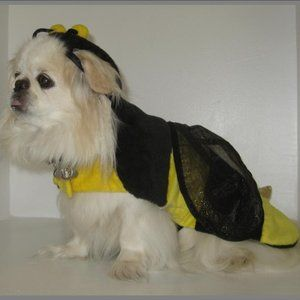 Bumble Bee Pet Costume – Dog not Included